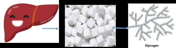 Liver turns glucose into glycogen.png